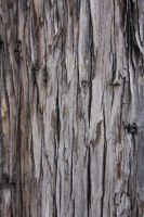 Bark Texture by ArtistStock