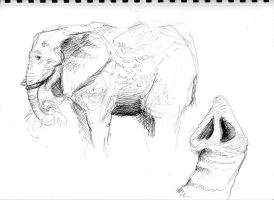 Elephant Study by Counterdraw