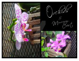 Orchids in Bloom by MercuryCrest