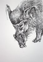 the red river hog by SwarzezTier