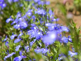 Blue Flowers by Solacen
