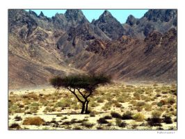 To Sinai by Yousry-Aref