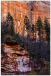 Oak Creek Canyon by ynissim