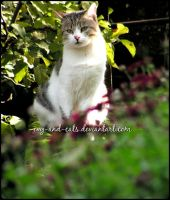 816 by evy-and-cats