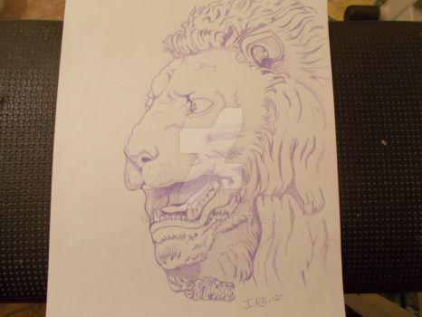 Lion by iNative24