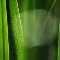 green synthesis by FeenoGraphie