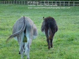 Arses of Asses by CounterCanterPhotos
