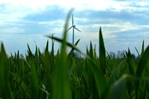 blades of grass by dxcGareyt