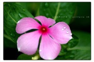 Flower 2 by Cally83