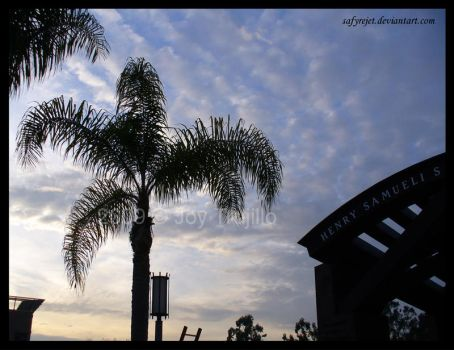 Palm Silhouette at the H.S.S. by safyrejet