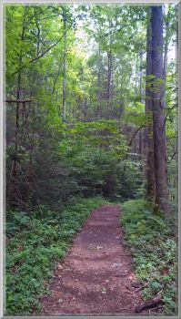 Old Sugarlands Trail Scenery 26 by slowdog294