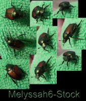 Japanese Beetle Stock by Melyssah6-Stock