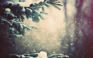 winter forest 02 by 323456kamumember