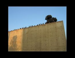 23 Pigeons Sitting On A Wall by friedmoonthing