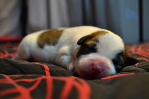 My sweet sleeping little dog :) by Magiamal
