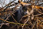 Cat in Brush by fixer
