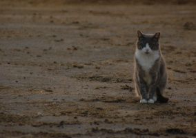 Farm Cat by hoofbeats111