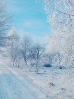 Winter photo (21) by generousrarity2