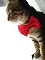 Bowties are Cool (Catz) by agreenbattery
