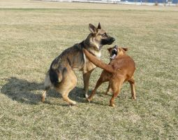 Dog Fight Stock 06 by Unseelie-Stock