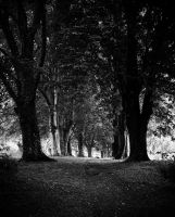 trees on parade by awjay
