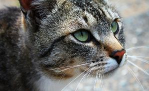 CAT by Max-CCCP