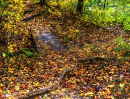 Forgotten Path by toddcarter