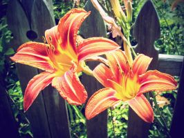 Twin Tiger Lilies by Kaito42