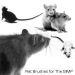 Rat Brushes by getfirefox
