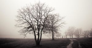 Walk in the fog... by denis2