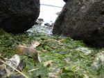Sea Weeds by Lvarcolac