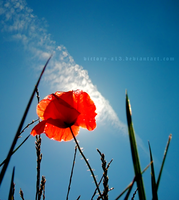 Poppy told me summer is here by victory-a13
