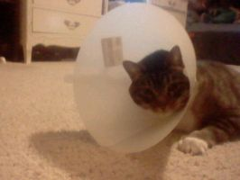 Lucky and teh Cone Collar by SillyEwe