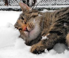 Tina loves snow by Biljana1313