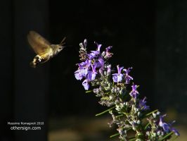 Hummingbird Hawk Moth by Othersign