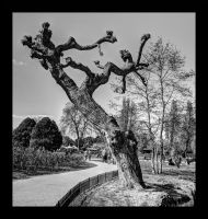 Tree pure and simple by aglezerman