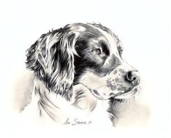 Spaniel by Sparkmachine