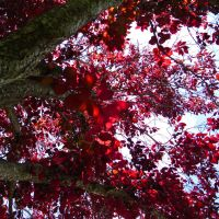 Red Tree by cupcakemonique