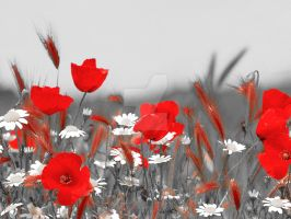Poppies field II by Lileya