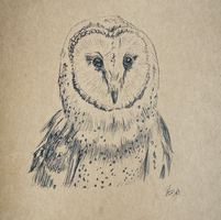 Barn Owl by Lucky101212
