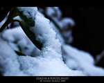 Cold as a winter night by Cheezen