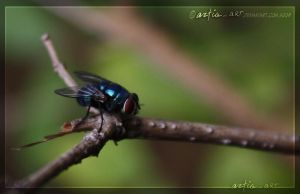 when a fly stood still by aztigart