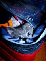i'm in yur suitcase by dresden-royalty