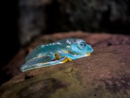 light blue frog by 01-11-89