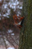 Squirrel Adventures [08] by OliverBPhotography