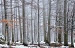 White forest by FlorinALF
