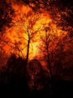 The forest under the burning skies by ANDYBURGESS