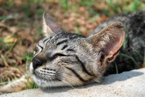 Cat Series No.5: Nap Time... by kn33cow