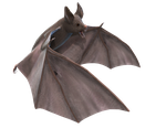 Bat PNGfile by neverFading-stock