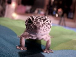My gecko by toastme